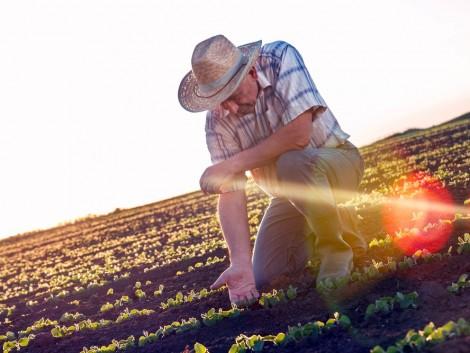 Mindent megteszel a talajok javításáért? Ezeket fogadd meg!