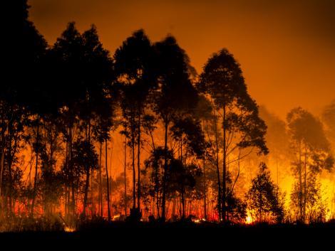 Komoly veszélyben vannak a trópusi erdők