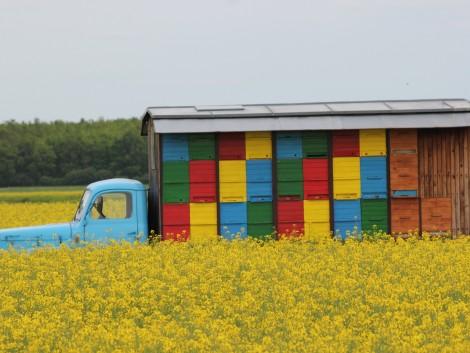 Támogatási igény adható be méhészeti járművekre