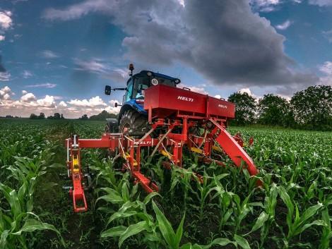 A meleg jól jön a kukoricának, de sajnos a gyomoknak is kedvez