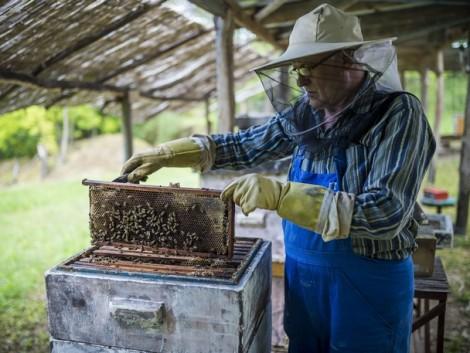 Méhészek, figyelem! Újra igényelhető támogatás!