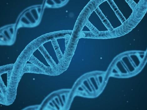 Az EU agrárminiszterei átdolgoznák a génmódosítás jogi szabályozását