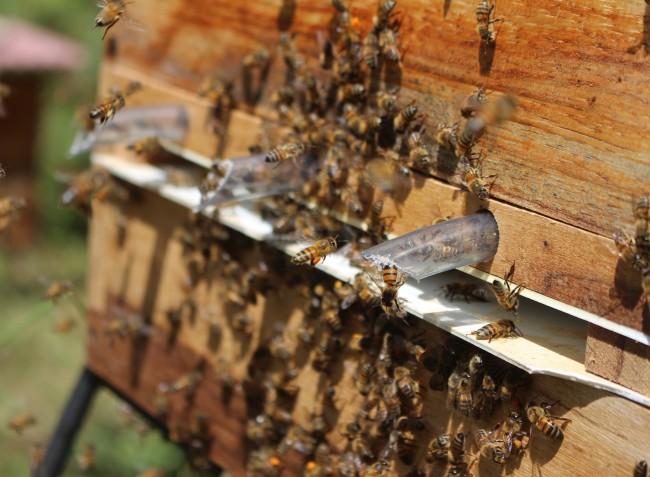 Már csak egy hétig lehet jelentkezni a méhegészségügyi támogatásra