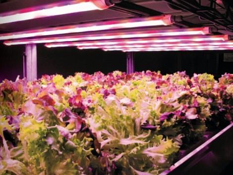 Energia-, víz- és termőföld-takarékosan termelni, kizárva a kártevőket – ez a jövő?