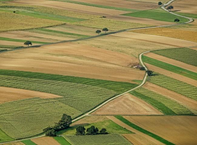 Elszabadultak az árak: 1,6 millió forint 1 hektár termőföld
