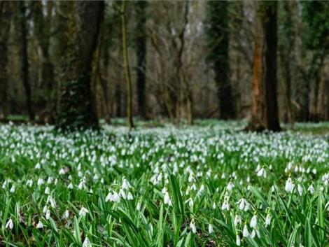 Beköszönt az igazi tavasz – VIDEÓ
