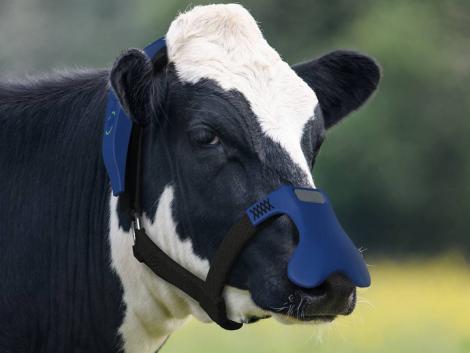 Egy maszk, ami átalakítja a tehenek környezetre káros böfögését