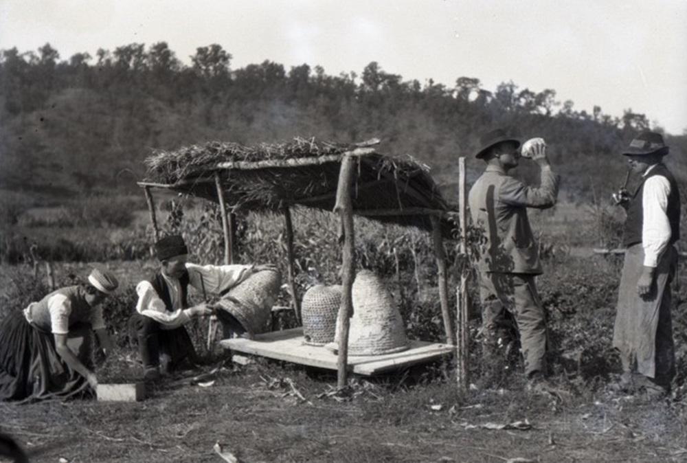 méhészek