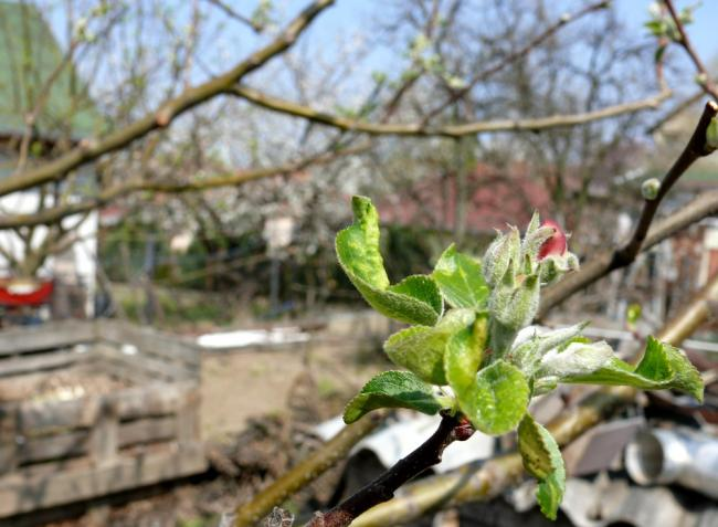 Növényvédelmi előrejelzés: Nincs két egyforma szezon, de sokat tanulhatunk az előzőekből