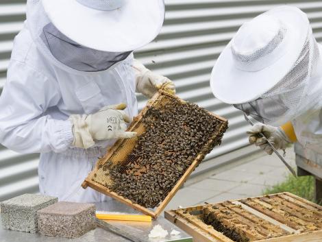 Figyelem, ez megkönnyíti a méhészek munkáját!