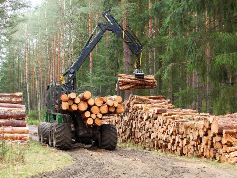 Az erdészeti ágazat az uniós célkitűzésekkel összhangban az alábbi támogatásokra számíthat