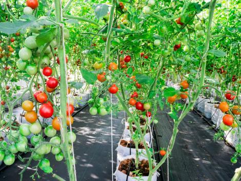 Az üvegházakban már szedik a zöldségeket, lassan kezdődik a korai szabadföldi kultúrák vetése is