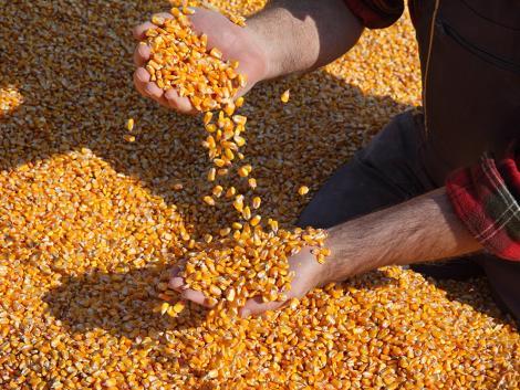 Koronavírus-járvány: mi lesz a gabonaárakkal?