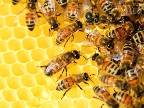 Új eljárással vizsgálná a méhelhullásokat a hatóság