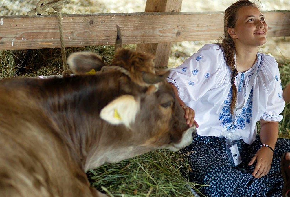 állattenyésztés