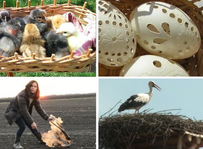 10+1 dolog, amit most végre megcsinálhatsz, ha vidéken élsz! – KÉPEK, VIDEÓK!