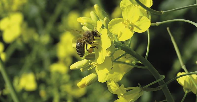repce és méh