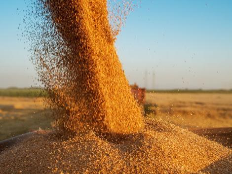 Nem akadályozza a gabonaszállítást a járvány