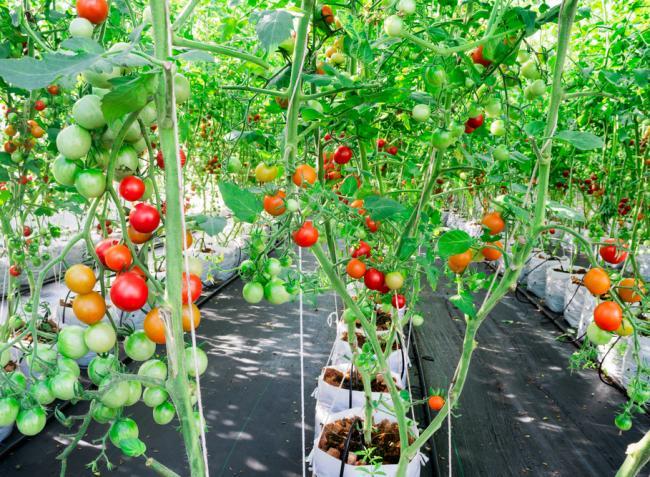 Mit kell tudni ahhoz, hogy otthon, különösebb szakismeret nélkül termesszünk zöldséget?