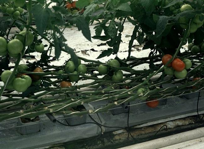 Így palántázzunk otthon zöldségeket!