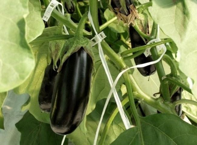 Zöldségtermesztés lépésről lépésre