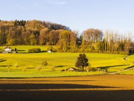 A magyar erdők ellenálló-képessége és változatossága is növekszik