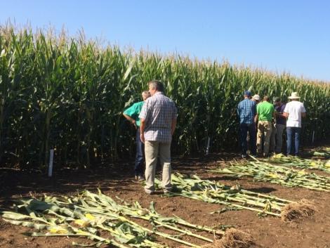 Itt az idő, jelentkezz a XII. Kukorica Termésversenyre!