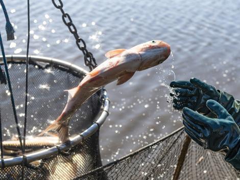 A koronavírus-járvány hatásai a halászati ágazatot különösen érzékenyen érintik