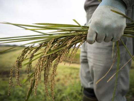 Japán 2025-ig meg akarja duplázni a mezőgazdasági exportját