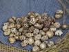 Szeretnél kevés pénzből jól üzletet csinálni? Termessz shiitake gombát!