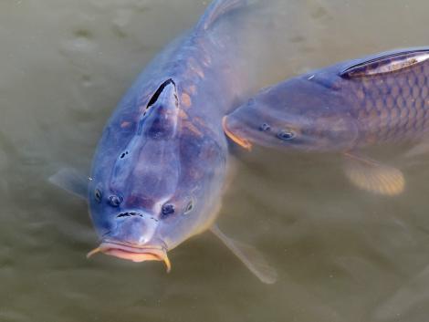 Soha nem látott támogatáshoz jutnak a haltermelők és a horgászatok