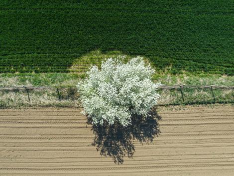 Kritikus a talaj állapota, de eső még nem várható