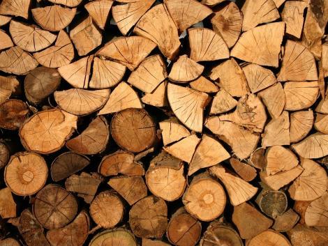 Már regisztrálhatnak az erdőgazdálkodók, tűzifa-értékesítők a Nébih online piacterére