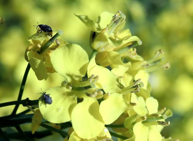 Így küzdjünk meg a növények károsítóival a kertben és a mezőgazdaságban