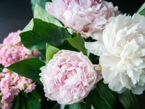 Korlátozás nélkül nyitva tarthatnak a virágüzletek anyák napján