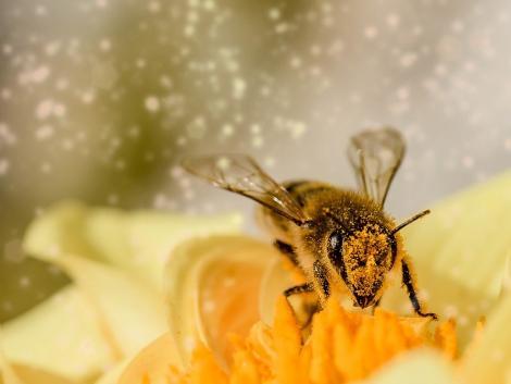 Ma van a méhek napja! Virtuális tanösvényen is meríthetünk ötleteket a beporzók védelméhez