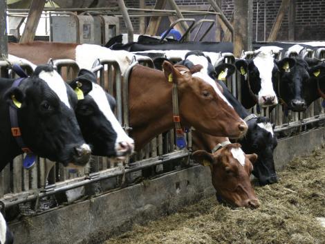 Sötét előrejelzés: az évtized végére tönkremegy az állattartók nagy része