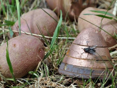 Első világháborús gyutacsokat találtak egy burgonyaszállítmányban Dunaegyházán