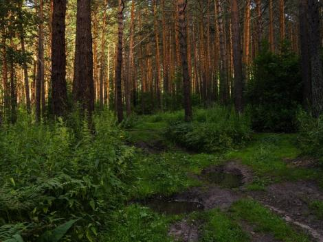 A kevert állományú erdők kevésbé érzékenyek a betegségekre és a szélsőséges időjárási viszonyokra