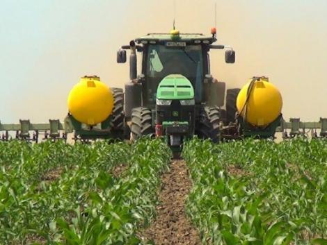 A kukoricát is kivégzi az aszály? Hogy csökkentsük a kockázatot?