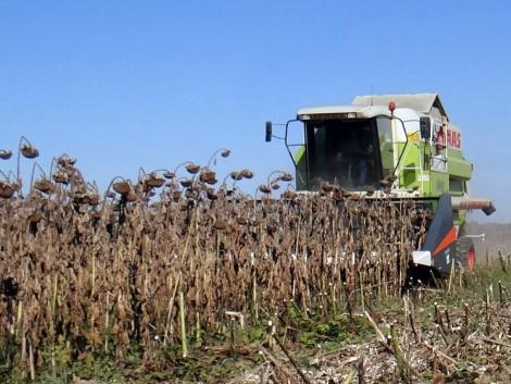 Ne hagyja veszni a profitot! Akár 400 kg termést is megmenthet hektáronként!
