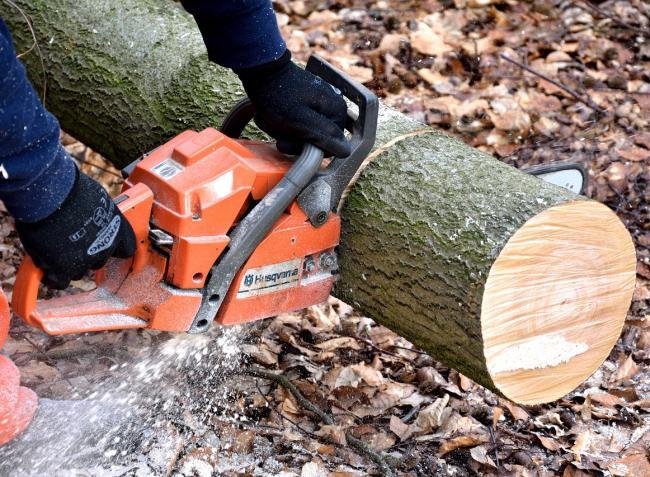 Jelentős változások az erdőgazdálkodásban