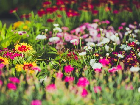 Mindössze egy liter gyönyörűvé varázsol egy egész kertet!