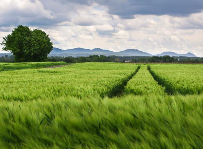 Zöld utat kapott az agrármentőcsomag: június végétől kezdődhet a kérelembeadás