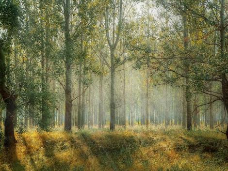 Módosult az erdészeti genetikai erőforrások megőrzése pályázat