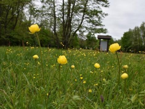 Számos program várja az érdeklődőket az Európai Nemzeti Parkok Napján