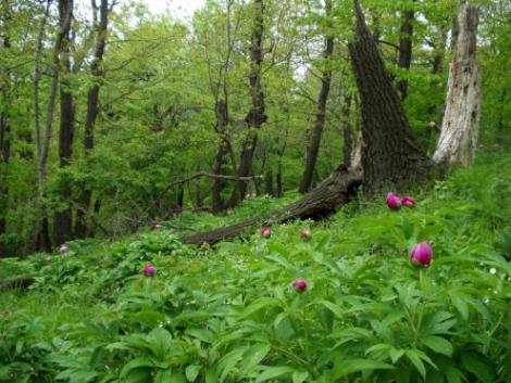 Egymillió állat- és növényfajt fenyeget a kipusztulás veszélye