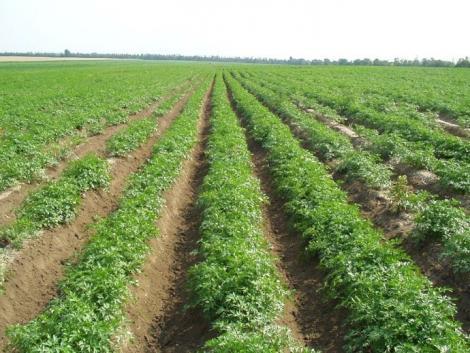Miyen növénysűrűséggel és hogyan vessünk zöldséget?