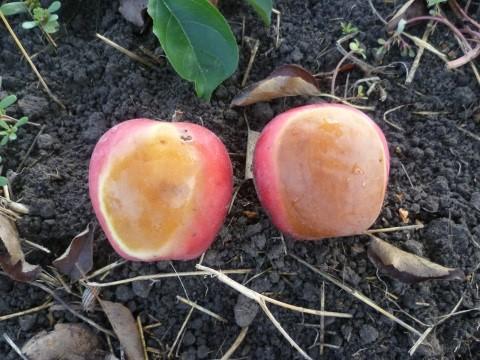 napégés almán