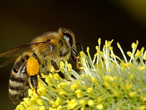 A beporzás fontosabb a növények számára, mint a trágyázás és az öntözés együttvéve?